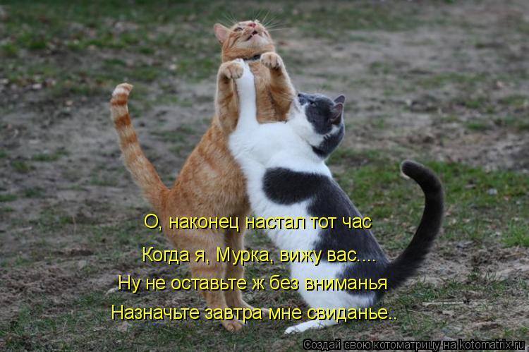 Котоматрица: О, наконец настал тот час Когда я, Мурка, вижу вас.... Ну не оставьте ж без вниманья Назначьте завтра мне свиданье..