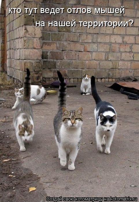 Котоматрица: кто тут ведет отлов мышей на нашей территории?