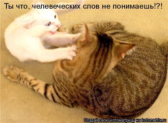 Котоматрица: Ты что, челевеческих слов не понимаешь!?!