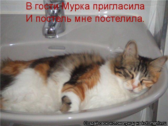 Котоматрица: В гости Мурка пригласила И постель мне постелила.