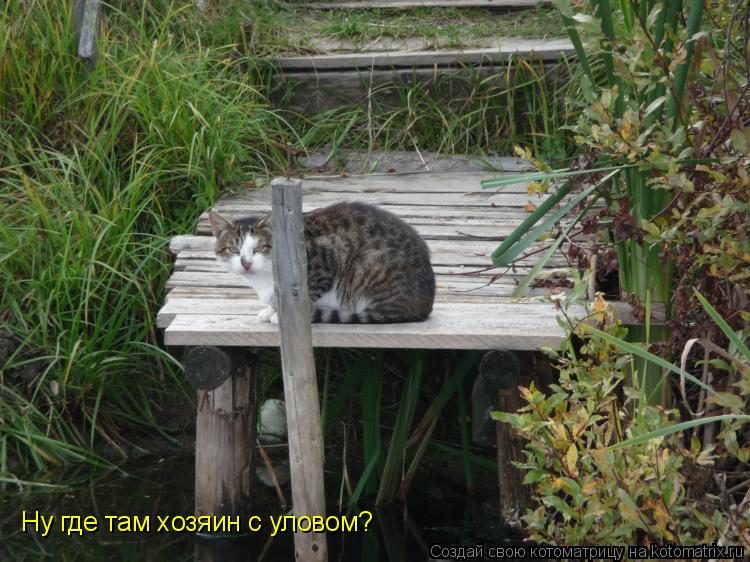 Котоматрица: Ну где там хозяин с уловом?