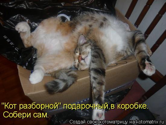 """Котоматрица: """"Кот разборной"""" подарочный,в коробке. Собери сам."""