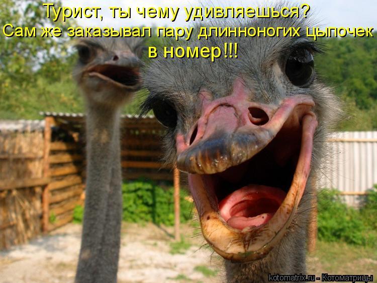http://kotomatrix.ru/images/lolz/2010/02/25/493251.jpg