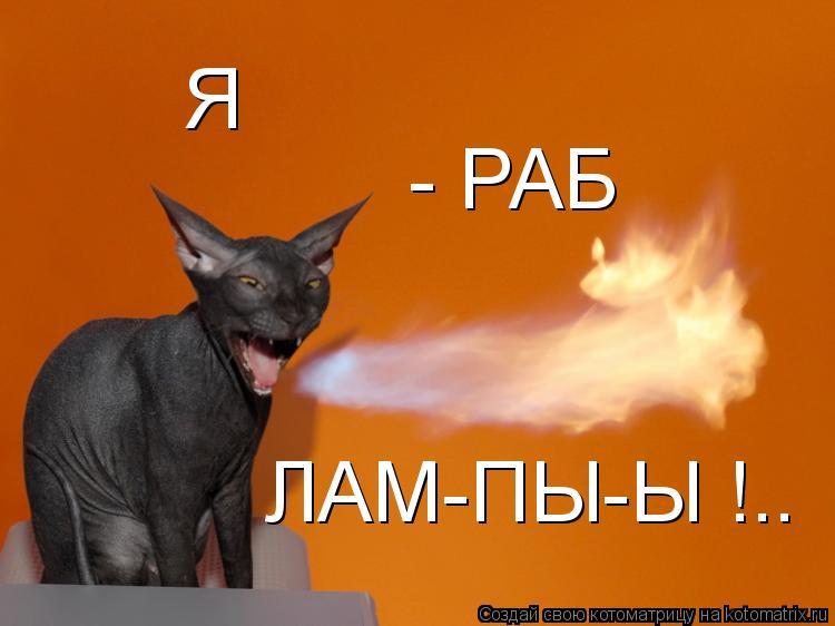 Котоматрица: Я  - РАБ ЛАМ-ПЫ-Ы !..