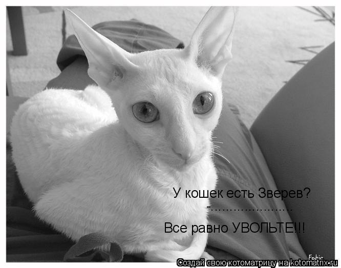 Котоматрица: У кошек есть Зверев? -...................... Все равно УВОЛЬТЕ!!!