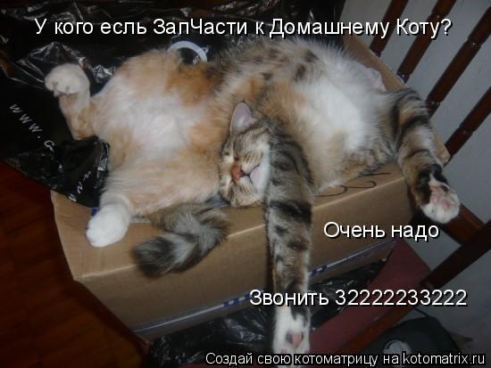 Котоматрица: У кого есль ЗапЧасти к Домашнему Коту? Очень надо Звонить 32222233222