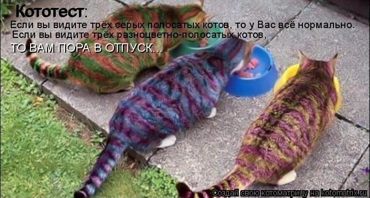 Котоматрица: Кототест Кототест: Если вы видите трёх серых полосатых котов, то у Вас всё нормально. Если вы видите трёх разноцветно-полосатых котов,  ТО ВА