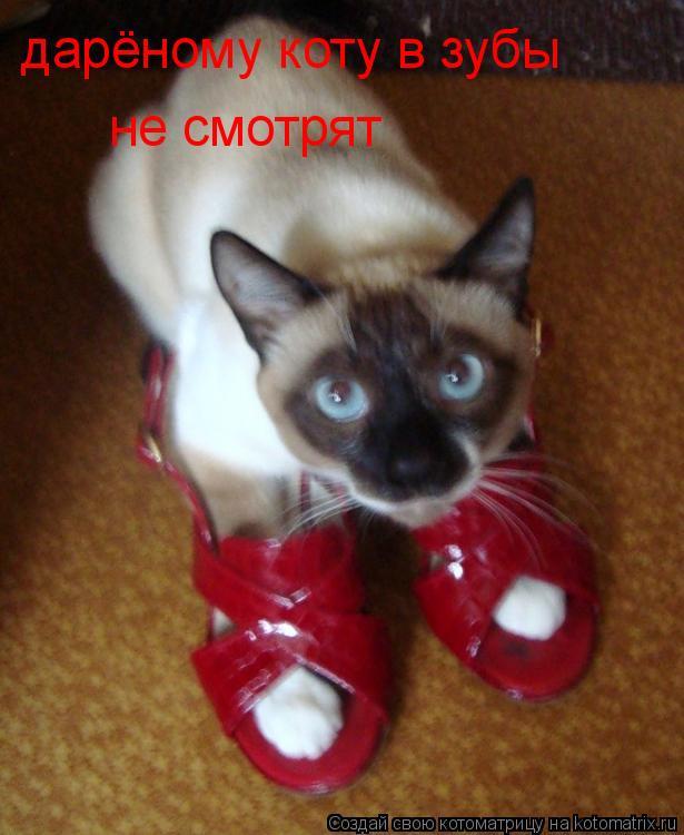 Котоматрица: дарёному коту в зубы не смотрят