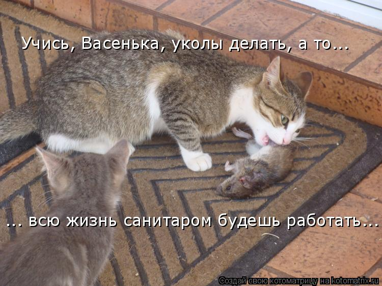 Котоматрица: Учись, Васенька, уколы делать, а то... ... всю жизнь санитаром будешь работать...