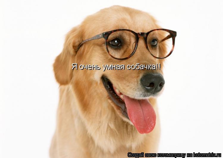 Котоматрица: Я очень умная собачка!!