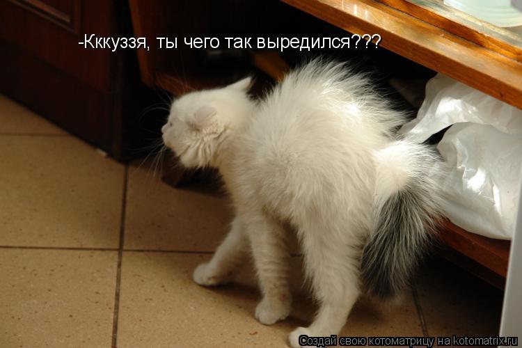 Котоматрица: -Кккуззя, ты чего так выредился???