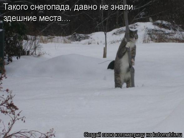 Котоматрица: Такого снегопада, давно не знали здешние места....