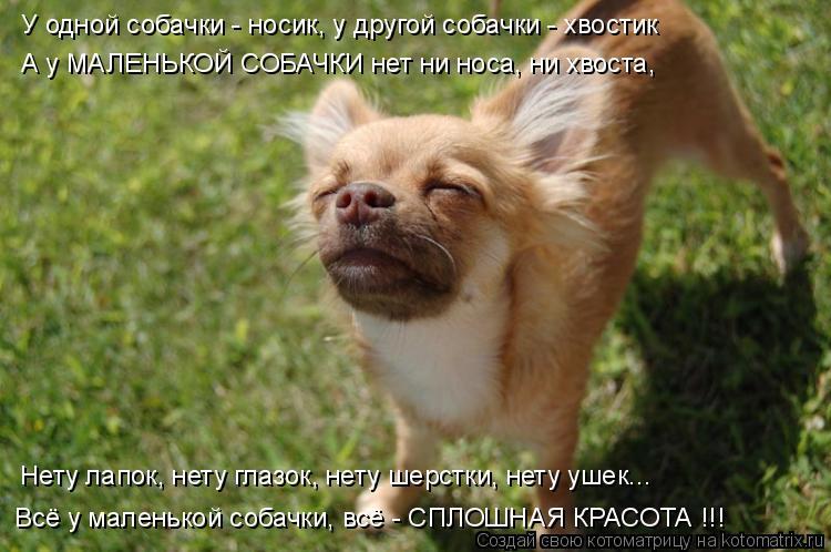 Котоматрица: У одной собачки - носик, у другой собачки - хвостик А у МАЛЕНЬКОЙ СОБАЧКИ нет ни носа, ни хвоста, Нету лапок, нету глазок, нету шерстки, нету уш