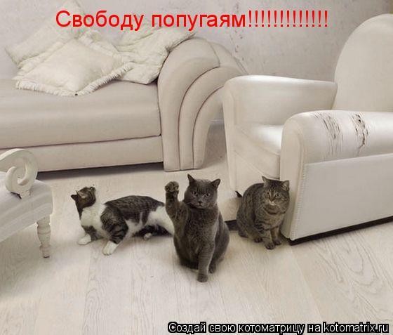 Котоматрица: Свободу попугаям!!!!!!!!!!!!!