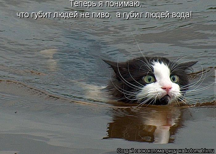 Котоматрица: Теперь я понимаю,  что губит людей не пиво,  а губит людей вода!