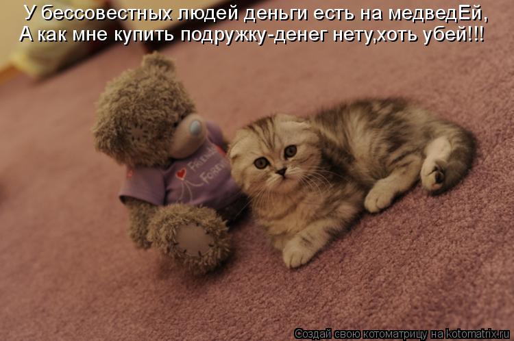 Котоматрица: У бессовестных людей деньги есть на медведЕй, A как мне купить подружку-денег нету,хоть убей!!!