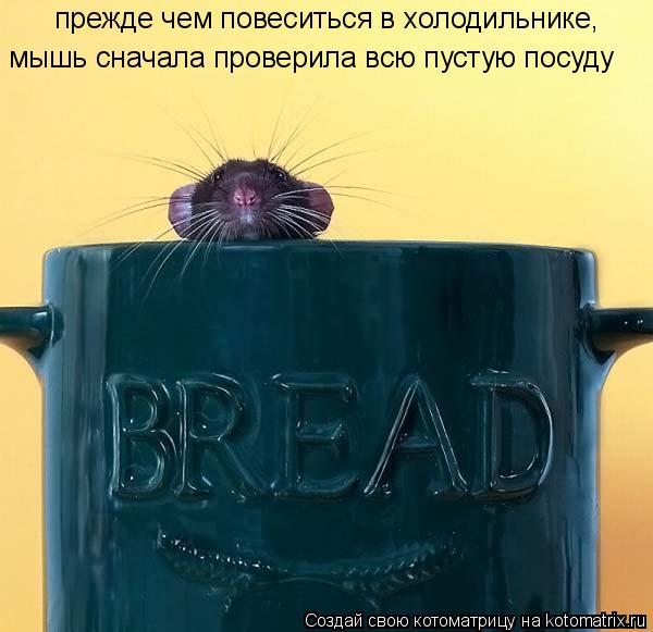 Котоматрица: прежде чем повеситься в холодильнике, мышь сначала проверила всю пустую посуду