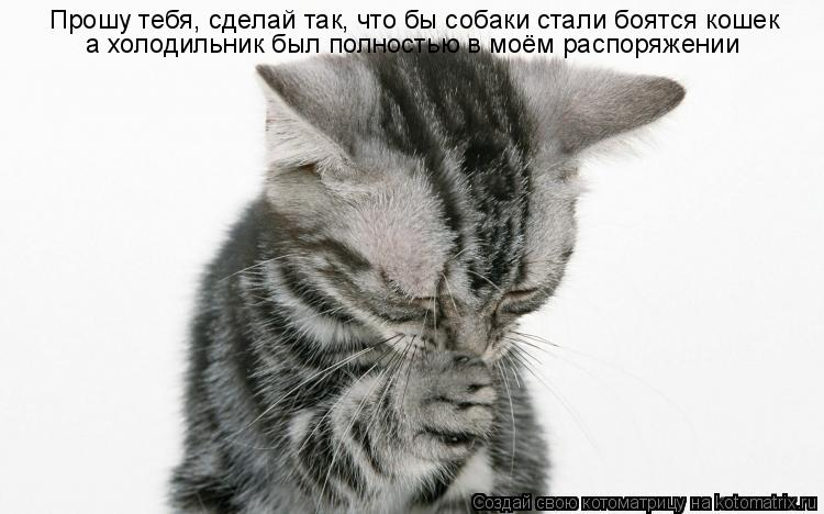 Котоматрица: Прошу тебя, сделай так, что бы собаки стали боятся кошек а холодильник был полностью в моём распоряжении
