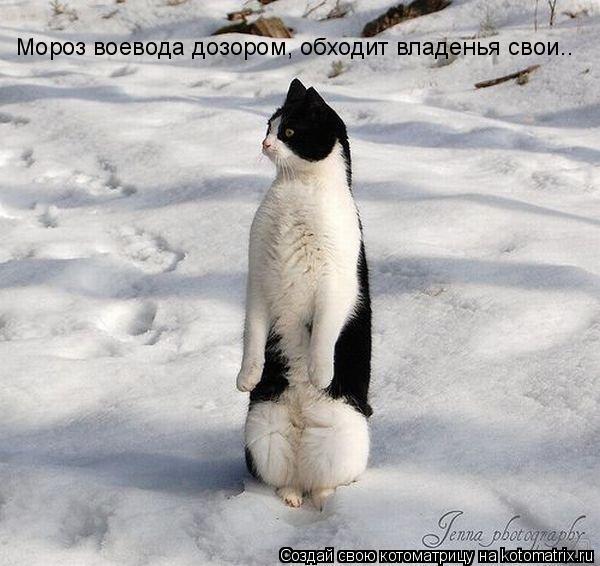 Котоматрица: Мороз воевода дозором, обходит владенья свои..