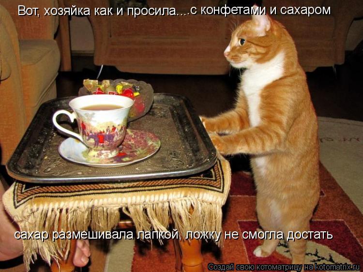 Котоматрица: Вот, хозяйка как и просила... .с конфетами и сахаром сахар размешивала лапкой, ложку не смогла достать