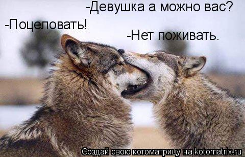 Котоматрица: -Девушка а можно вас??????? -Поцеловать!!!!!! - Нет поживать -Девушка а можно вас? -Поцеловать! -Нет поживать.