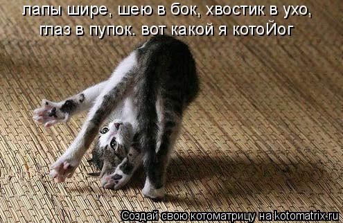 Котоматрица: лапы шире, шею в бок, хвостик в ухо,  глаз в пупок. вот какой я котоЙог