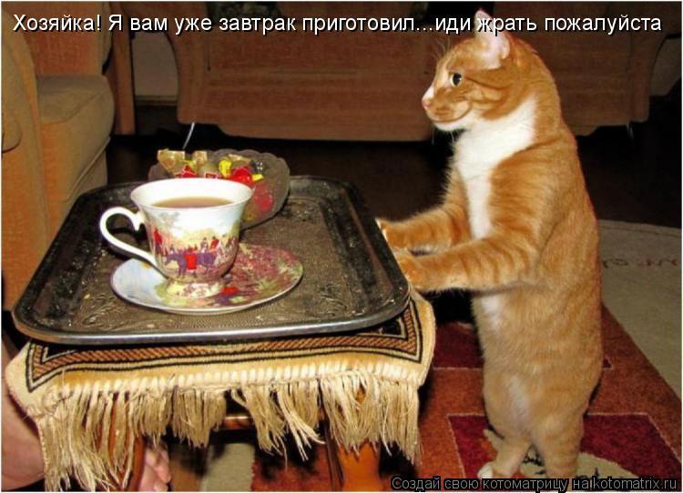 Котоматрица: Хозяйка! Я вам уже завтрак приготовил...иди жрать пожалуйста