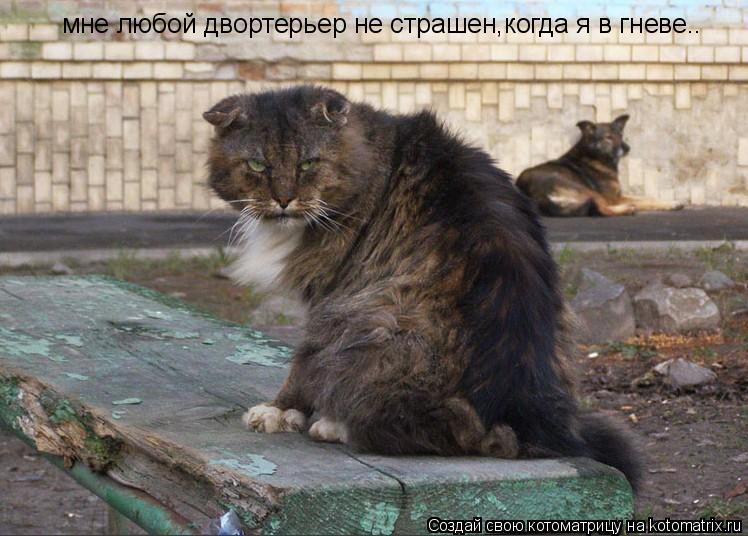 Котоматрица: мне любой двортерьер не страшен,когда я в гневе..