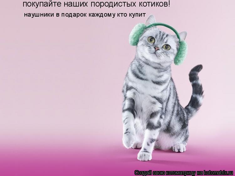 Котоматрица: покупайте наших породистых котиков! наушники в подарок каждому кто купит