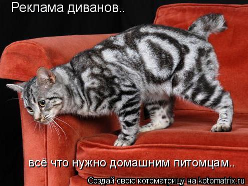 Котоматрица: Реклама диванов..  всё что нужно домашним питомцам..