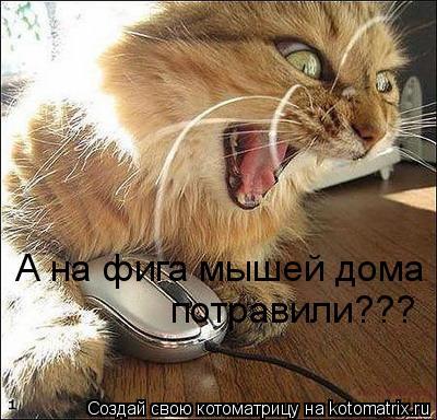 Котоматрица: А на фига мышей дома  потравили???