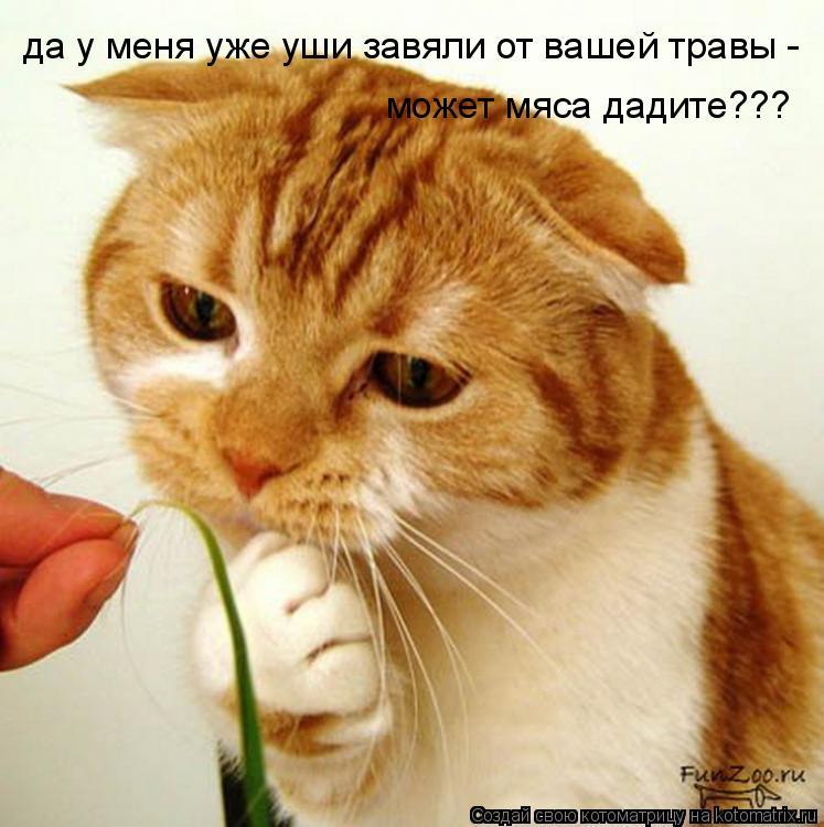Котоматрица: да у меня уже уши завяли от вашей травы -  может мяса дадите???