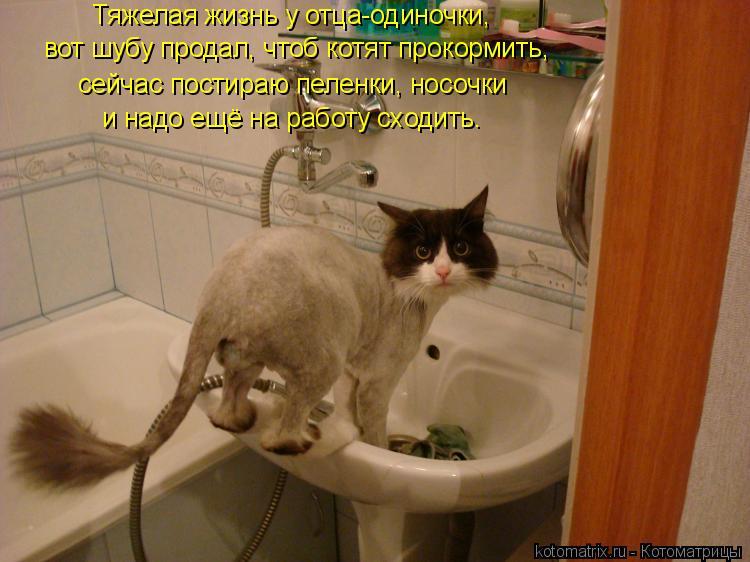 Котоматрица: Тяжелая жизнь у отца-одиночки, вот шубу продал, чтоб котят прокормить, сейчас постираю пеленки, носочки и надо ещё на работу сходить.