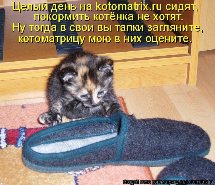 Котоматрица: Целый день на kotomatrix.ru сидят, покормить котёнка не хотят. Ну тогда в свои вы тапки загляните, котоматрицу мою в них оцените.
