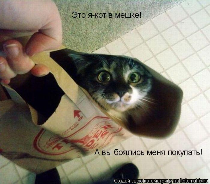Котоматрица: Это я-кот в мешке! А вы боялись меня покупать!