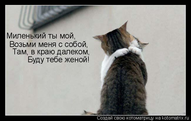 Котоматрица: Миленький ты мой, Возьми меня с собой, Там, в краю далеком, Буду тебе женой!