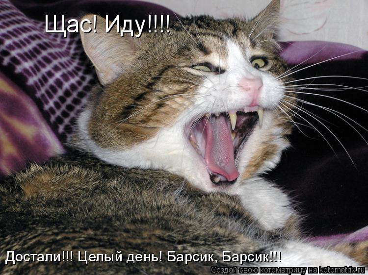 Котоматрица: Щас! Иду!!!! Достали!!! Целый день! Барсик, Барсик!!!
