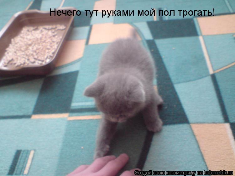 Котоматрица: Нечего тут руками мой пол трогать!