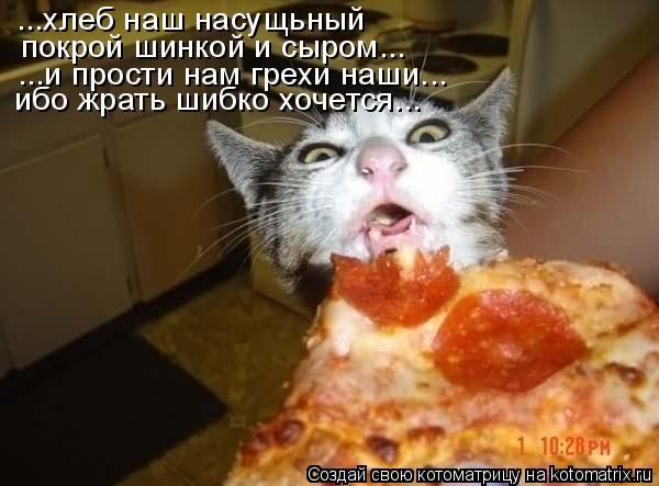 Котоматрица: ибо жрать шибко хочется... ...и прости нам грехи наши... ...хлеб наш насущьный покрой шинкой и сыром...