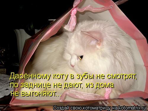 Котоматрица: Дарённому коту в зубы не смотрят, по заднице не дают, из дома не выгоняют...