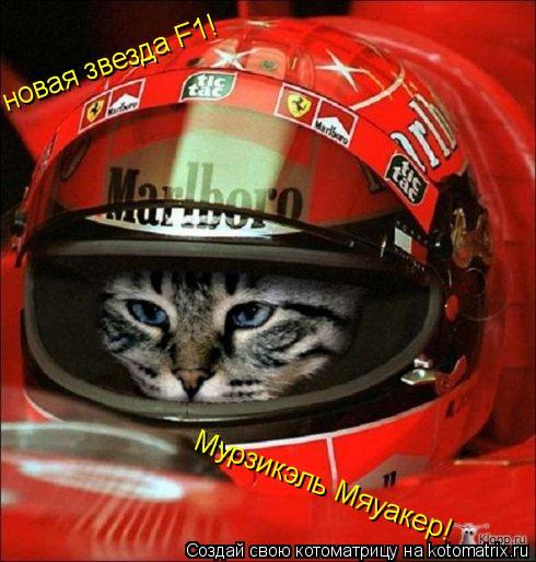 Котоматрица: новая звезда F1!  Мурзикэль Мяуакер!