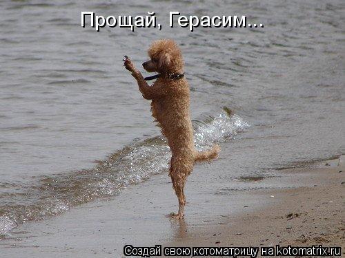 http://kotomatrix.ru/images/lolz/2010/02/26/498890.jpg