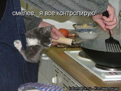 Котоматрица: смелее,  я все контролирую!
