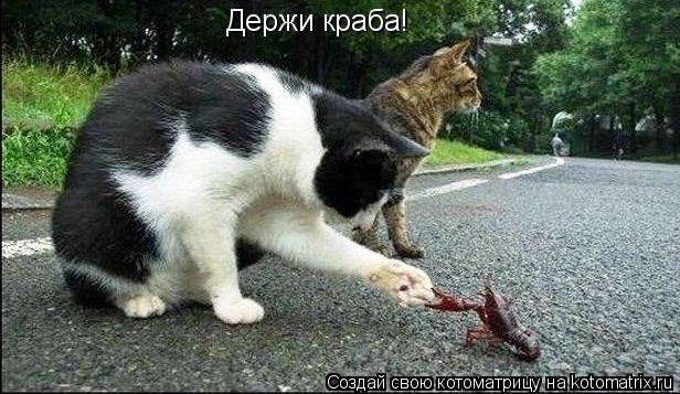 Котоматрица: Держи краба!