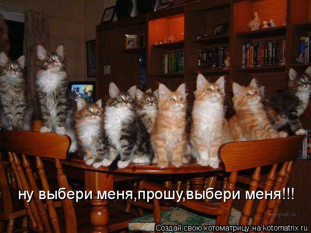 Котоматрица: ну выбери меня,прошу,выбери меня!!!