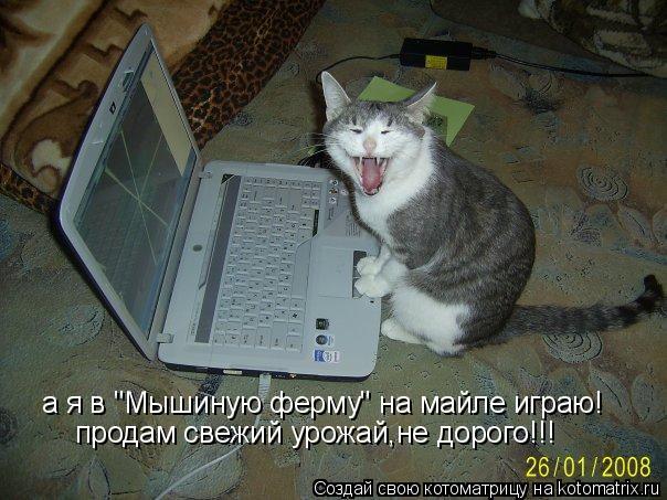 """Котоматрица: а я в """"Мышиную ферму"""" на майле играю! продам свежий урожай,не дорого!!!"""