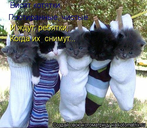 Котоматрица: Постиранные, чистые Висят котятки, И ждут, ребятки, Когда их  снимут...