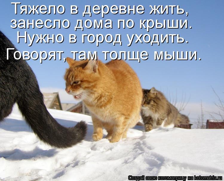 Котоматрица: Тяжело в деревне жить, занесло дома по крыши. Нужно в город уходить. Говорят, там толще мыши.