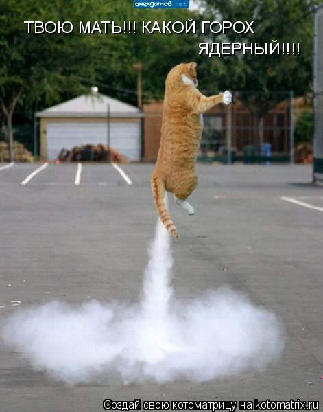 Котоматрица: ТВОЮ МАТЬ!!! КАКОЙ ГОРОХ ЯДЕРНЫЙ!!!!