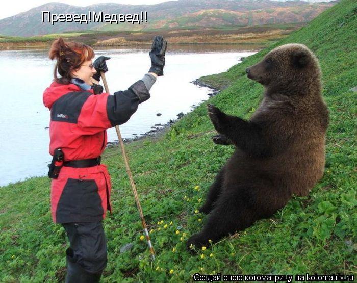 Котоматрица: Превед!Медвед!!